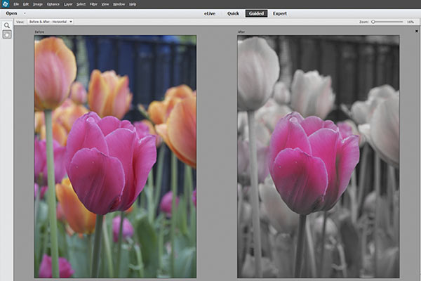 Adobe Photoshop Elements & Adobe Premiere Elements 14